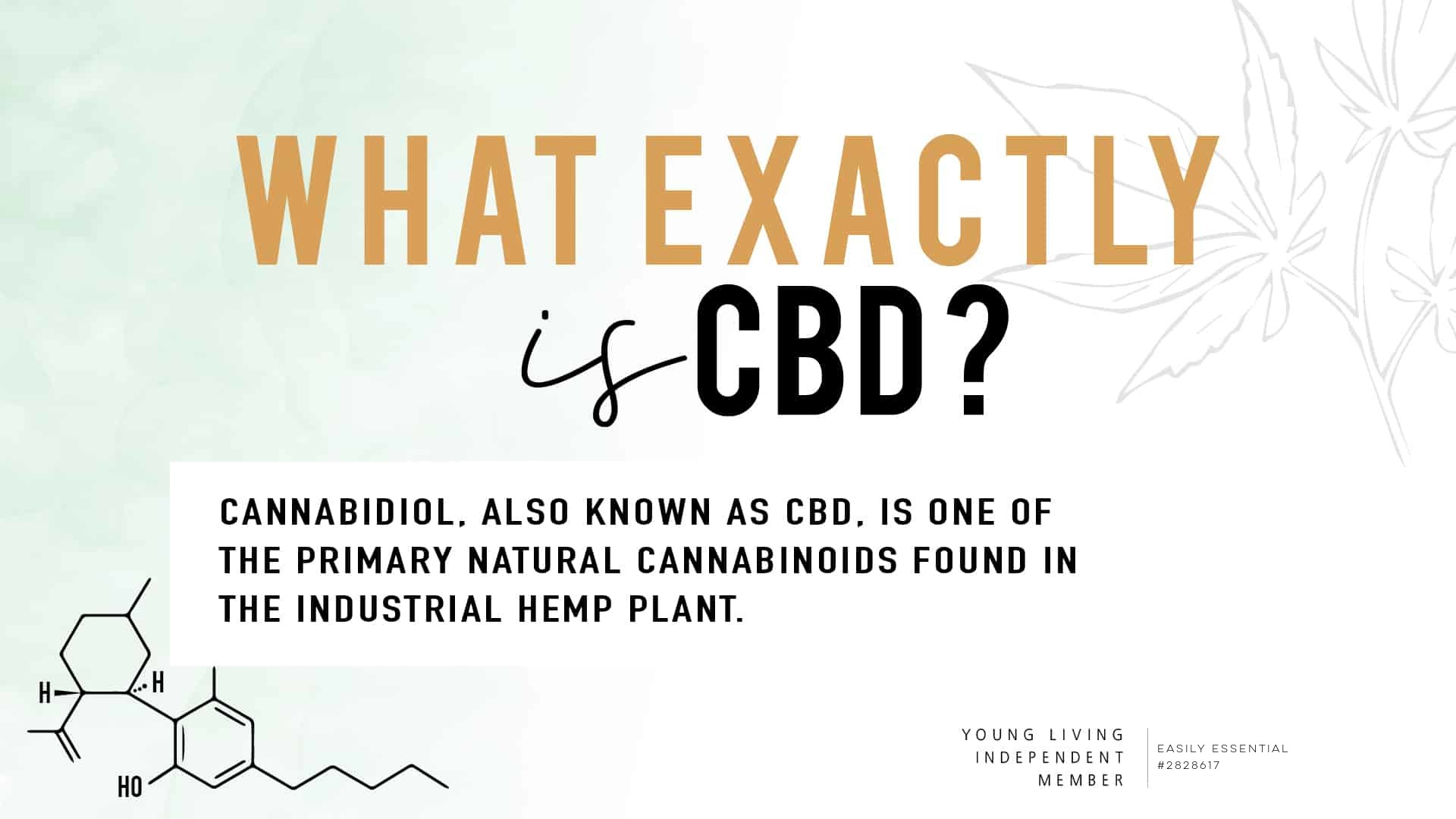 How To Use CBD For People, Pets, and Horses!