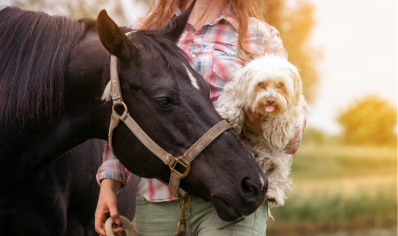Supporting Dogs & Horses With Essential Oils