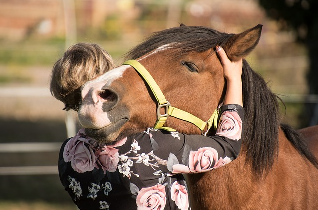 Easy Guide To Essential Oils For Horses